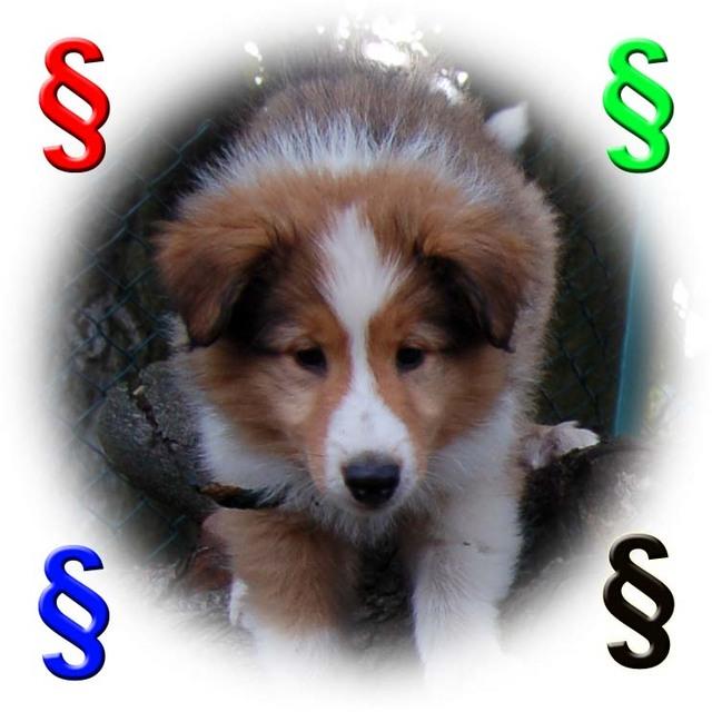 hundecom magazin» blogarchiv » hundezüchterin muss an  ~ Wasserkocher Zu Verschenken