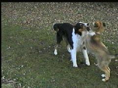 jagen hund abgewöhnen