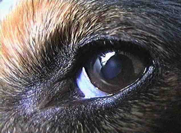 Pflege - Hunde.com \