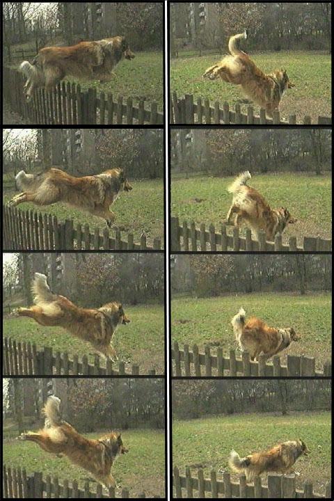 Springen Hunde Com Alles Rund Um Den Hund