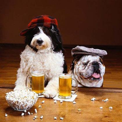 funny birthday dog drinking